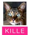 Kille-head-name
