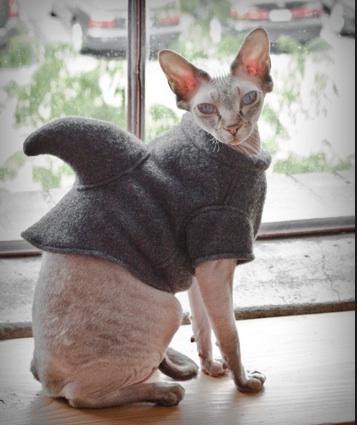 Shark back cat