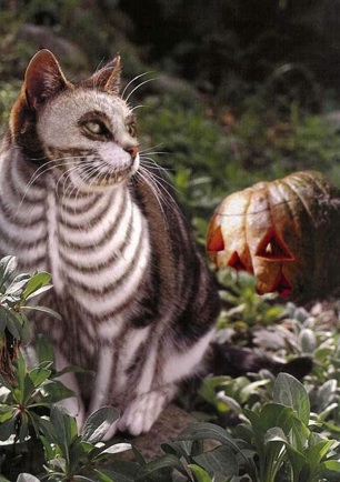 Skeletal cat