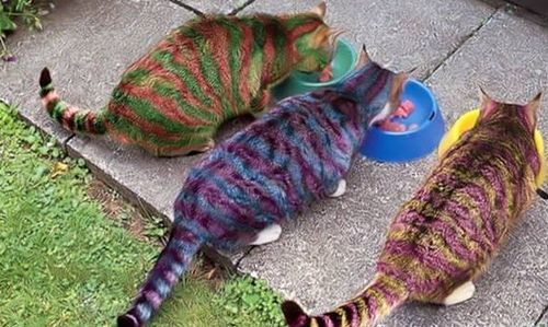 Stripey Cats