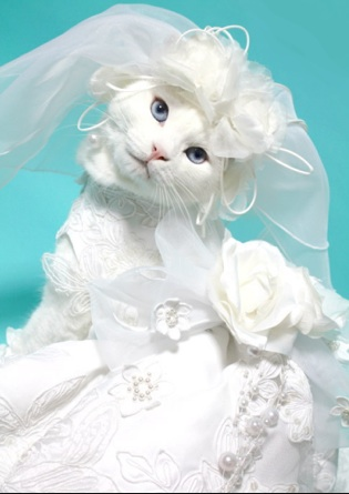 Wannabe wedding cat